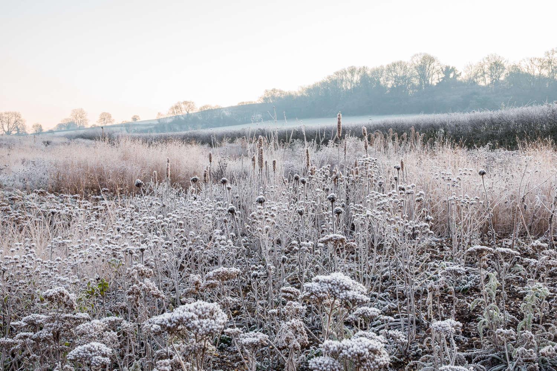 Winter border with Achillea, Monarda, grasses and Agastache 'Black Adder' seed heads