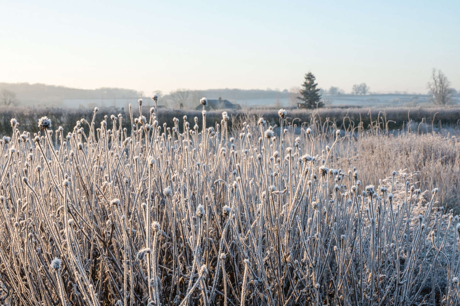 Frosted seed heads of Echinacea pallida at Oudolf Field at Hauser and Wirth, Somerset. Photograph by Heather Edwards. See more at Designer Visit: Piet Oudolf's Otherworldly Garden at Hauser & Wirth Somerset.