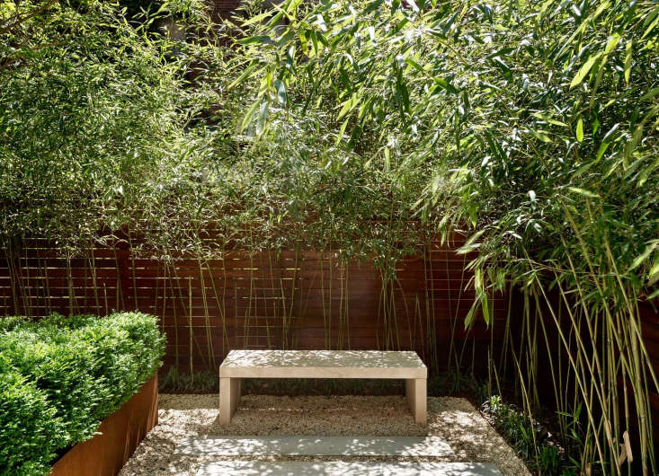 To lighten the look, strip the lower leaves from bamboo planted against a fence or wall. Photograph by Matthew Williams. See more of this garden in Before & After: From &#8\2\20;Fishbowl&#8\2\2\1; to Private Oasis.