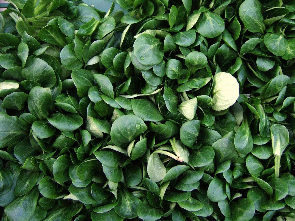 mache-leaves-valerianella-locusta-zyance-wikimedia