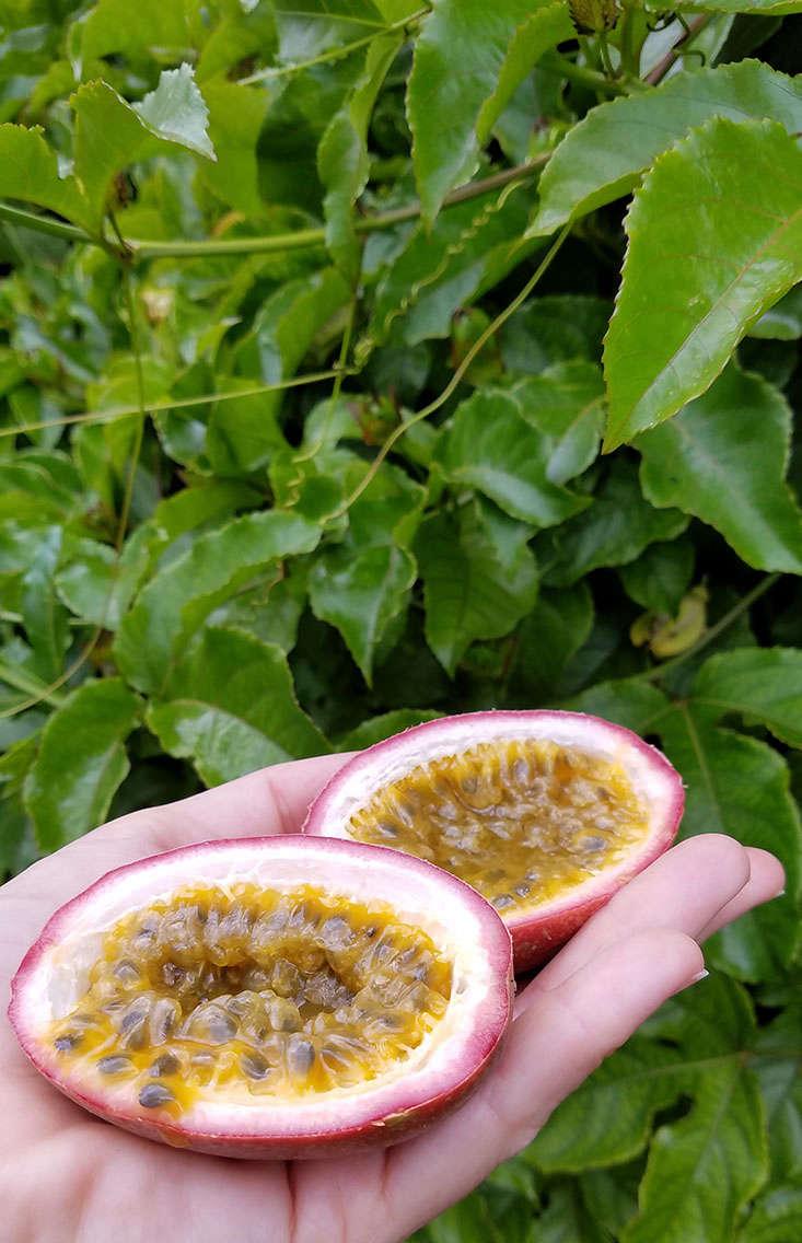 passion-fruit-inside-marie-viljoen