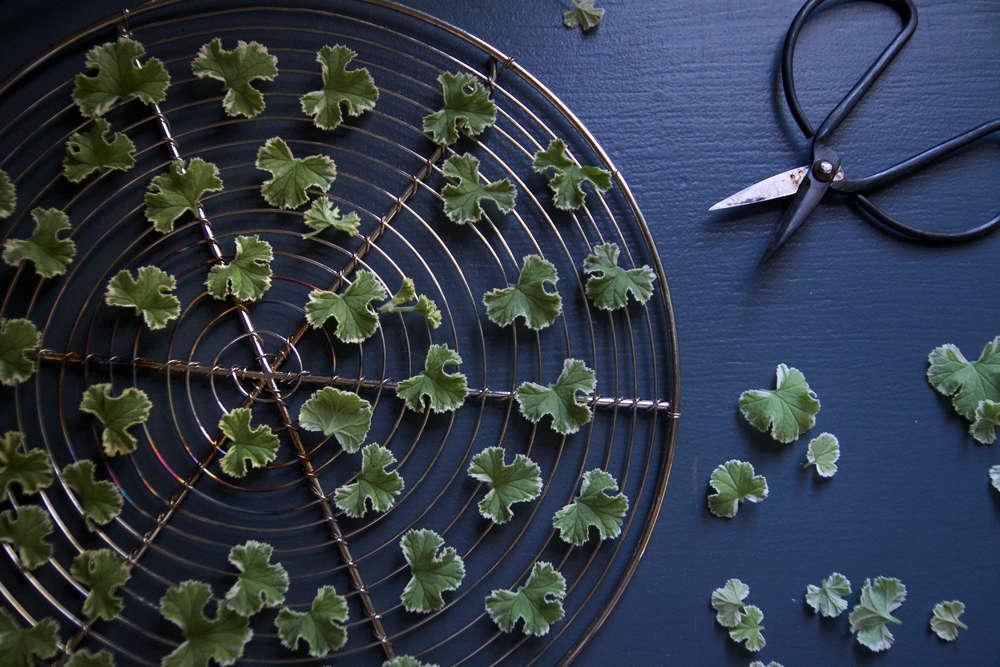 pelargonium dried leaves