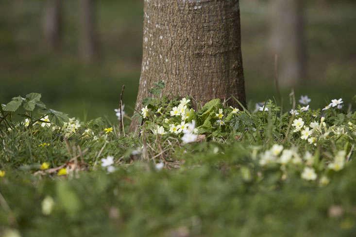 primroses-tree-britt-dyer