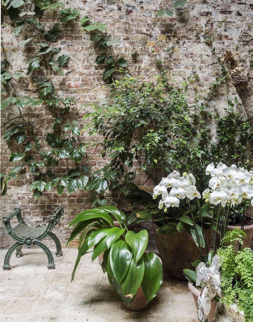 Rose Uniacke Indoor Conservatory Garden Matthew Williams Gardenista Book