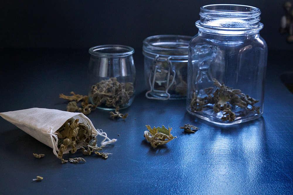 scented geranium how to dry leaves sachet tea 7