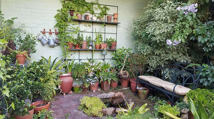shade-garden-in-pots-marie-viljoen