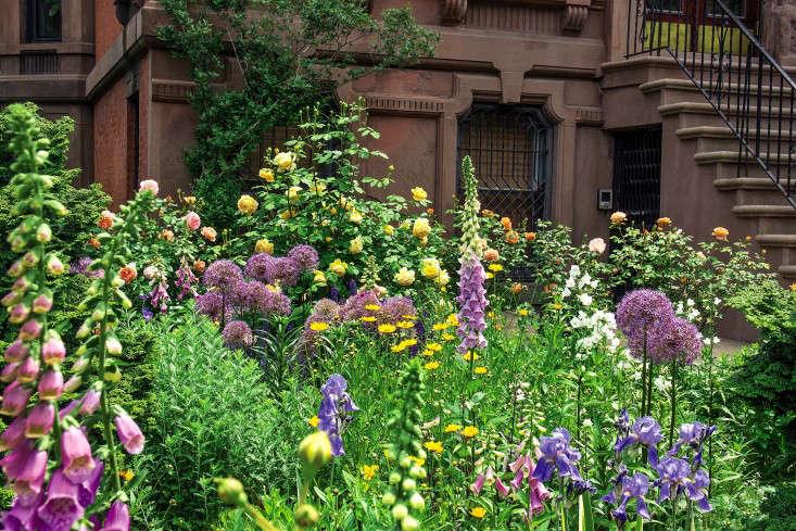 sidewalk-gardens-new-york-front-garden-foxgloves-roses-brownstone-gardenista-1-e1473695858326