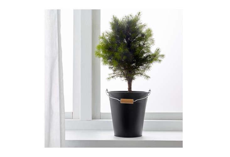 socker-plant-bucket-ikea