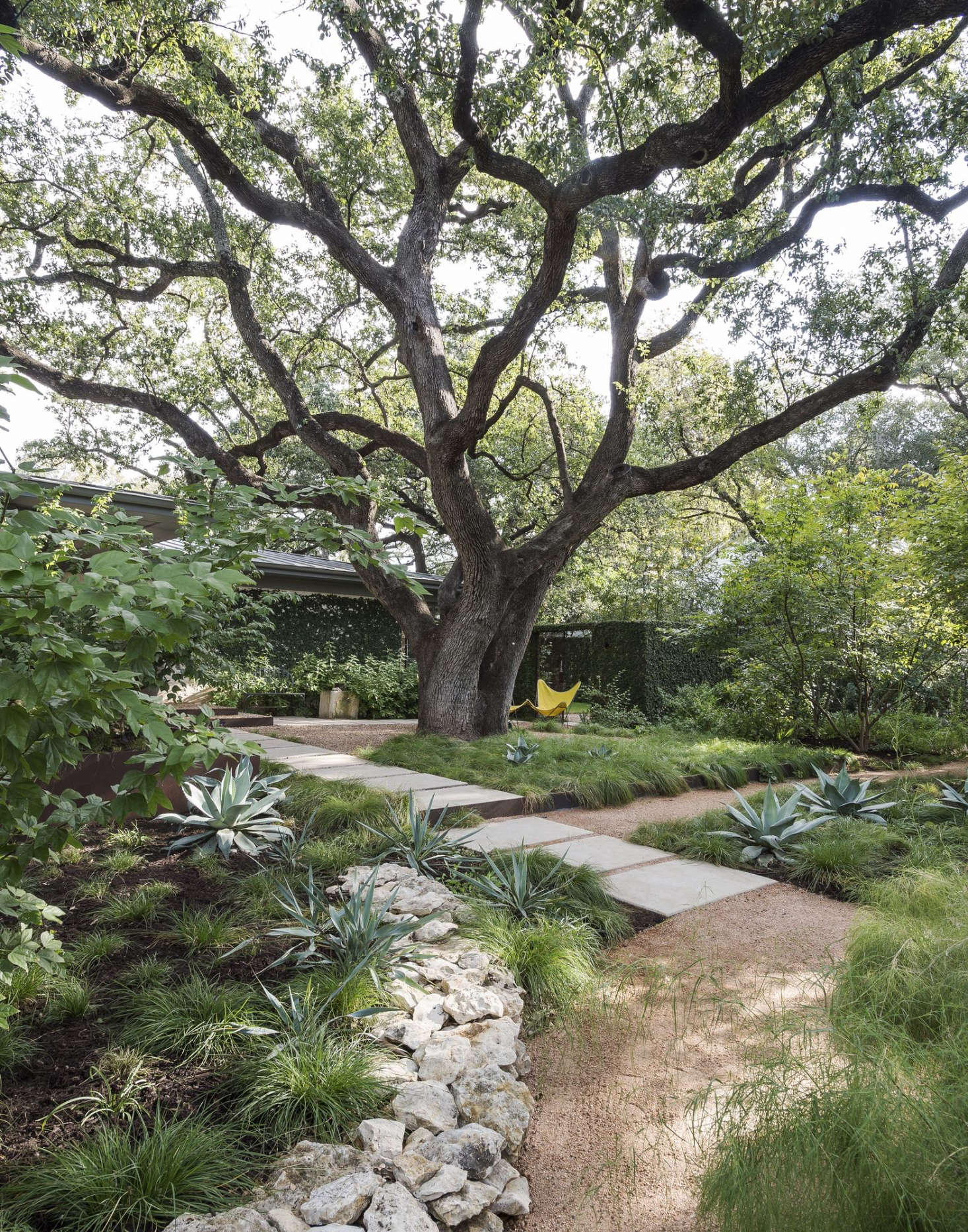 A majestic live oakis a focal point inlandscape architect Christine Ten Eyck's garden in Austin, Texas. (See her garden in our book,Gardenista: The Definitive Guide to Stylish Outdoor Spaces.) Photograph by Matthew Williams for Gardenista. For more on specimen trees, seeSpecimen Trees: Are They Worth It?