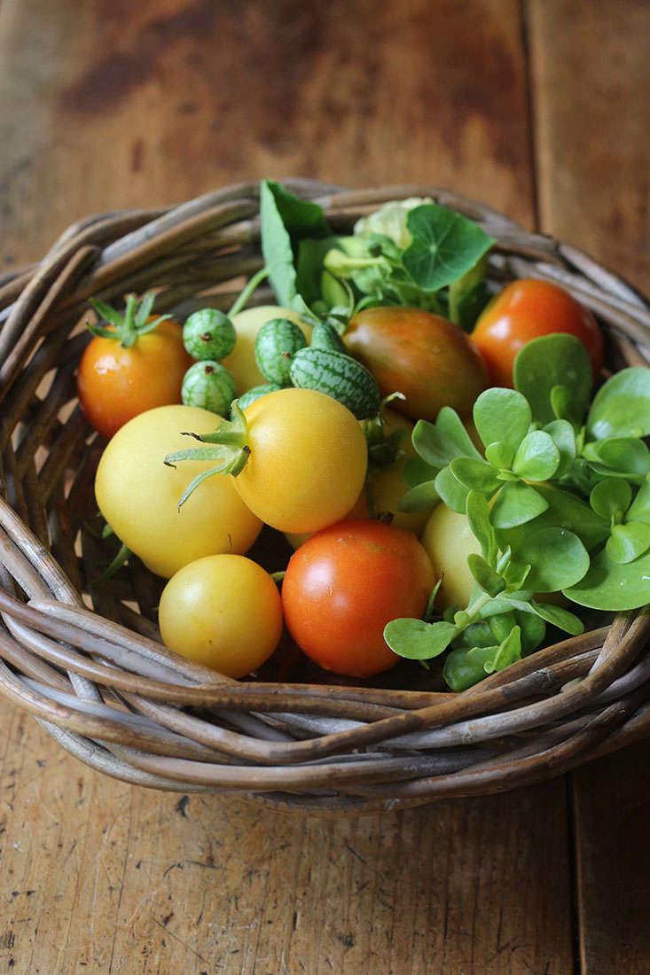 summer-crops-marie-viljoen