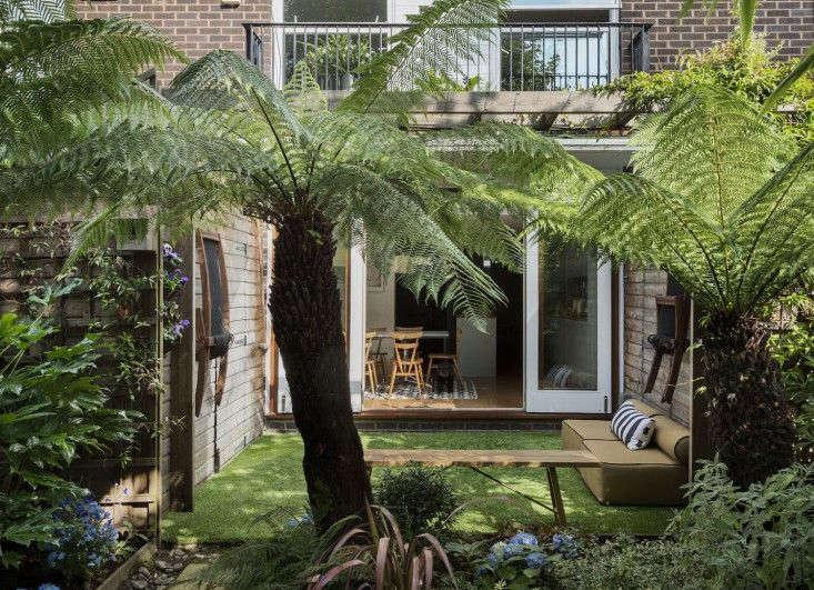 tree-fern-london-garden-matthew-williams