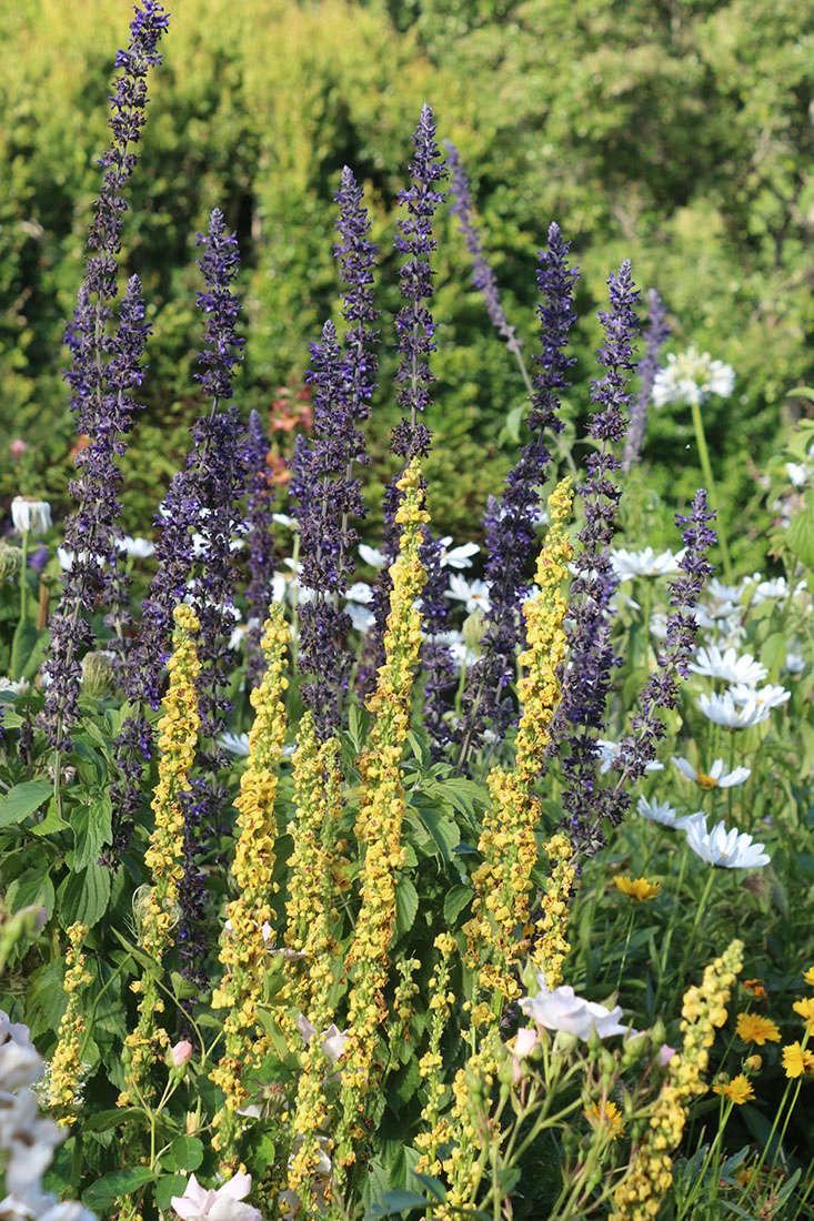 vertical-flowers-marie-viljoen