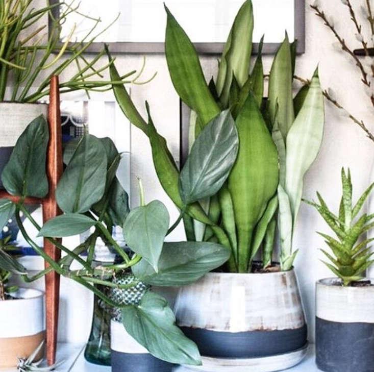 @throstudio_gardenista_current_obsessions