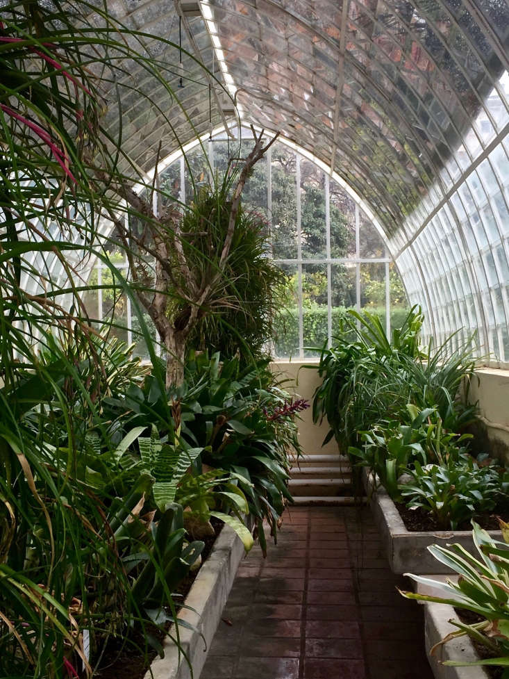 Inside the botanic greenhouse in Valencia, filtered sunlight and humid air help Bromeliads thrive. Photograph by Michelle Slatalla.