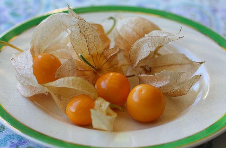 cape-gooseberries-marie-viljoen