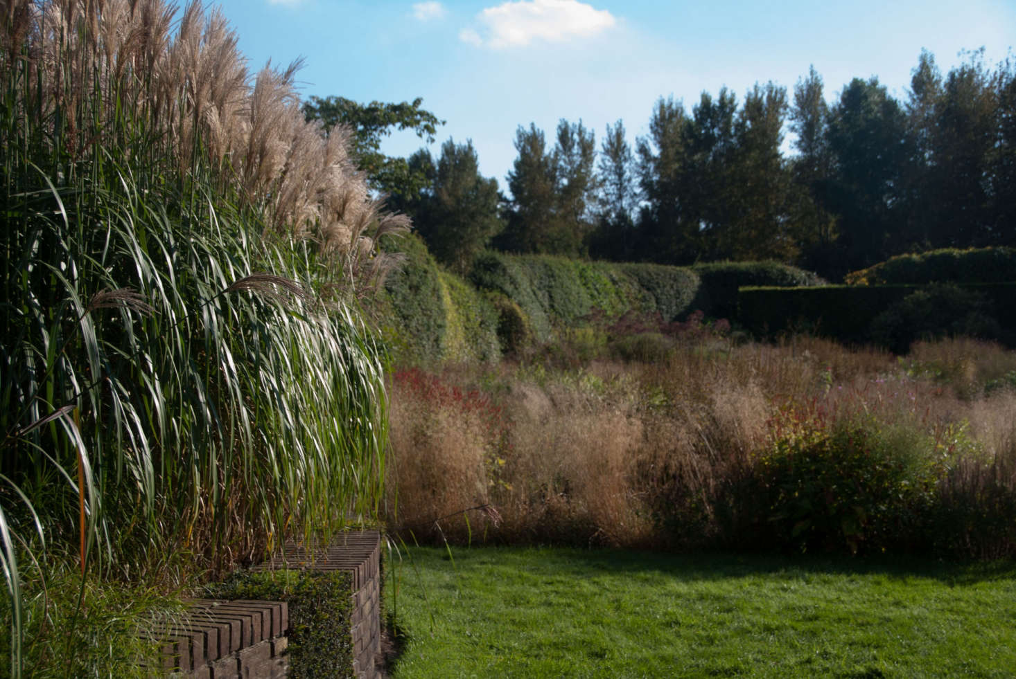 Miscanthus sinensis 'Malepartus' is one of garden designer Piet Oudolf's signature grasses.Photograph courtesy of My Garden School. For more, see Garden Design: Learning to Plant the Piet Oudolf Way.