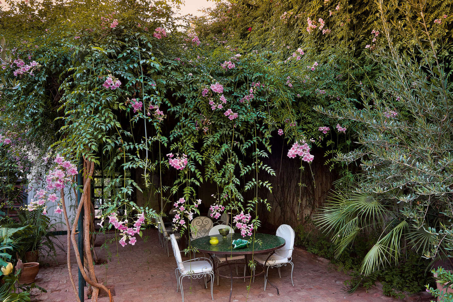 A floral fringe of Pink Trumpet Vine (Podranea ricasoliana) provides lunchtime shade at Riad Madani.