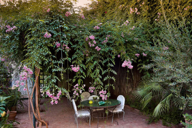 A floral fringeof Pink Trumpet Vine (Podranea ricasoliana) provides lunchtime shade at Riad Madani.