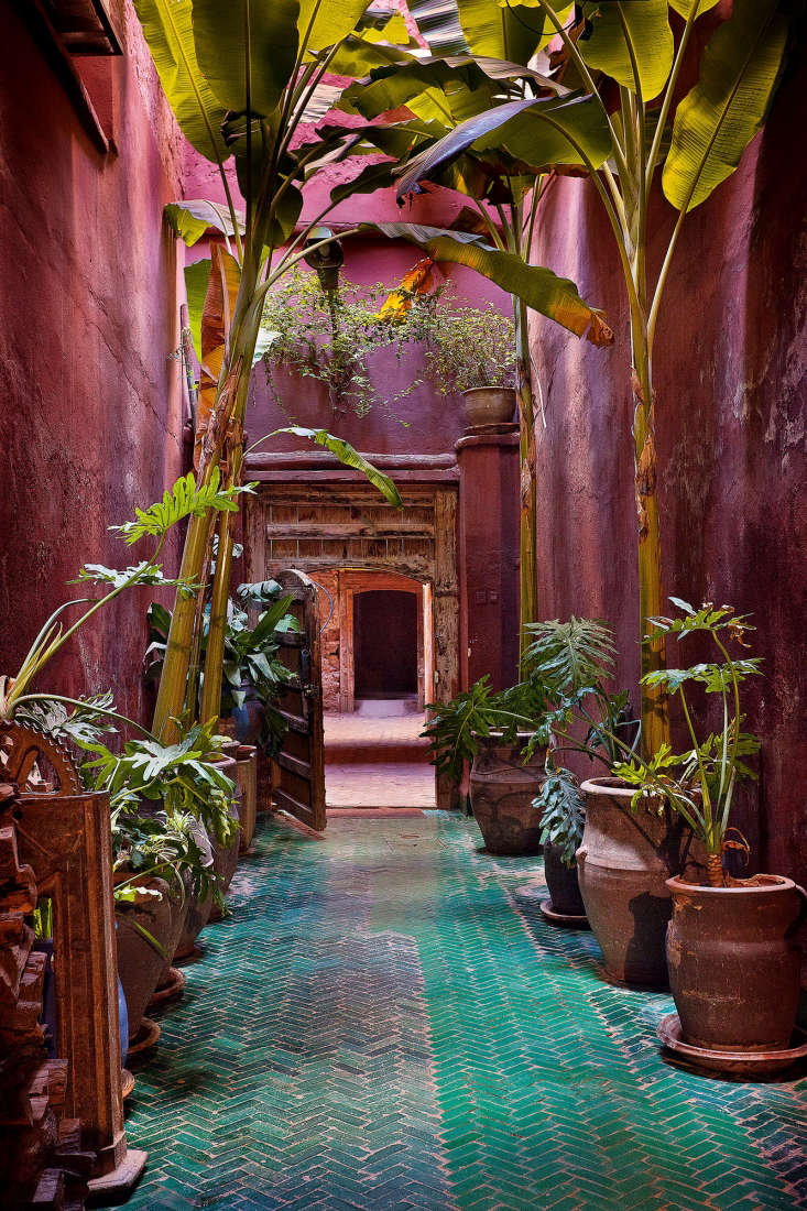 Potted bananas are interspersed with smaller Philodendron bipinnatifidum, at Riad Madani.
