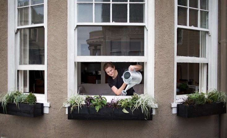 Our editor Meredith uses a galvanized watering can to thoroughly soak the plants in her window boxes in San Francisco. Photograph by Liesa Johannssen for Gardenista, fromContainer Gardens: 5 Tips for a Perfect Window Box.