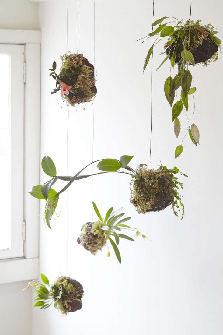 Learn to make an intriguing hanging rock garden where orchids suspend on lava rocks.