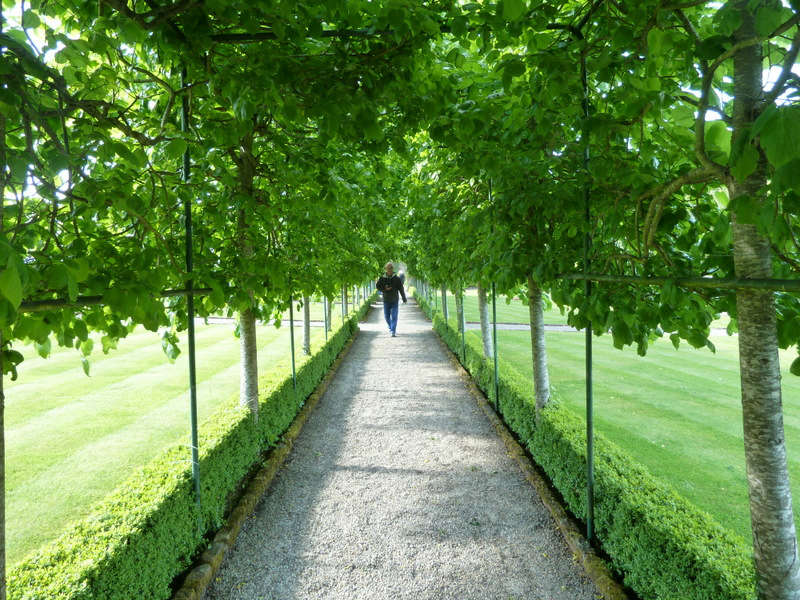 Pleached beech hedge, at Dromoland Castle in County Clare, Ireland