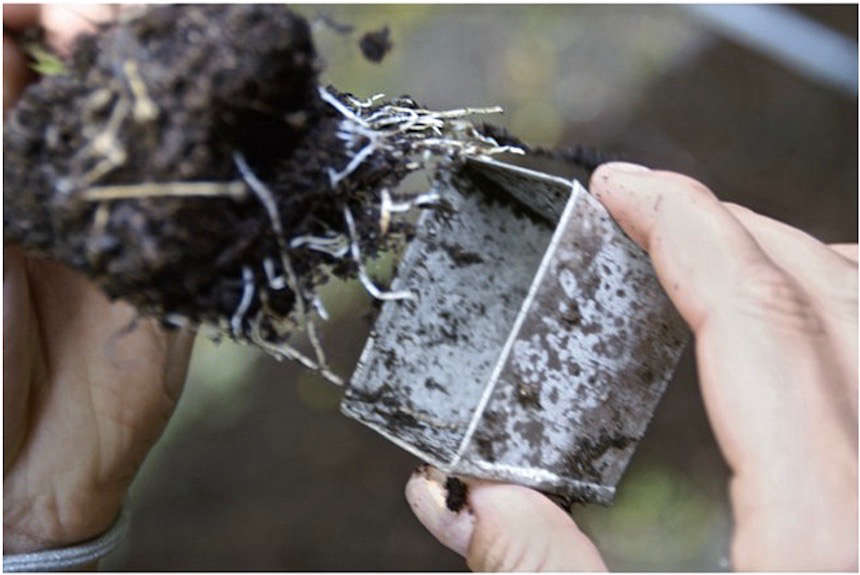 The little pots are bottomless and have sloped sides to make it easy to push out seedlings without damage to roots.
