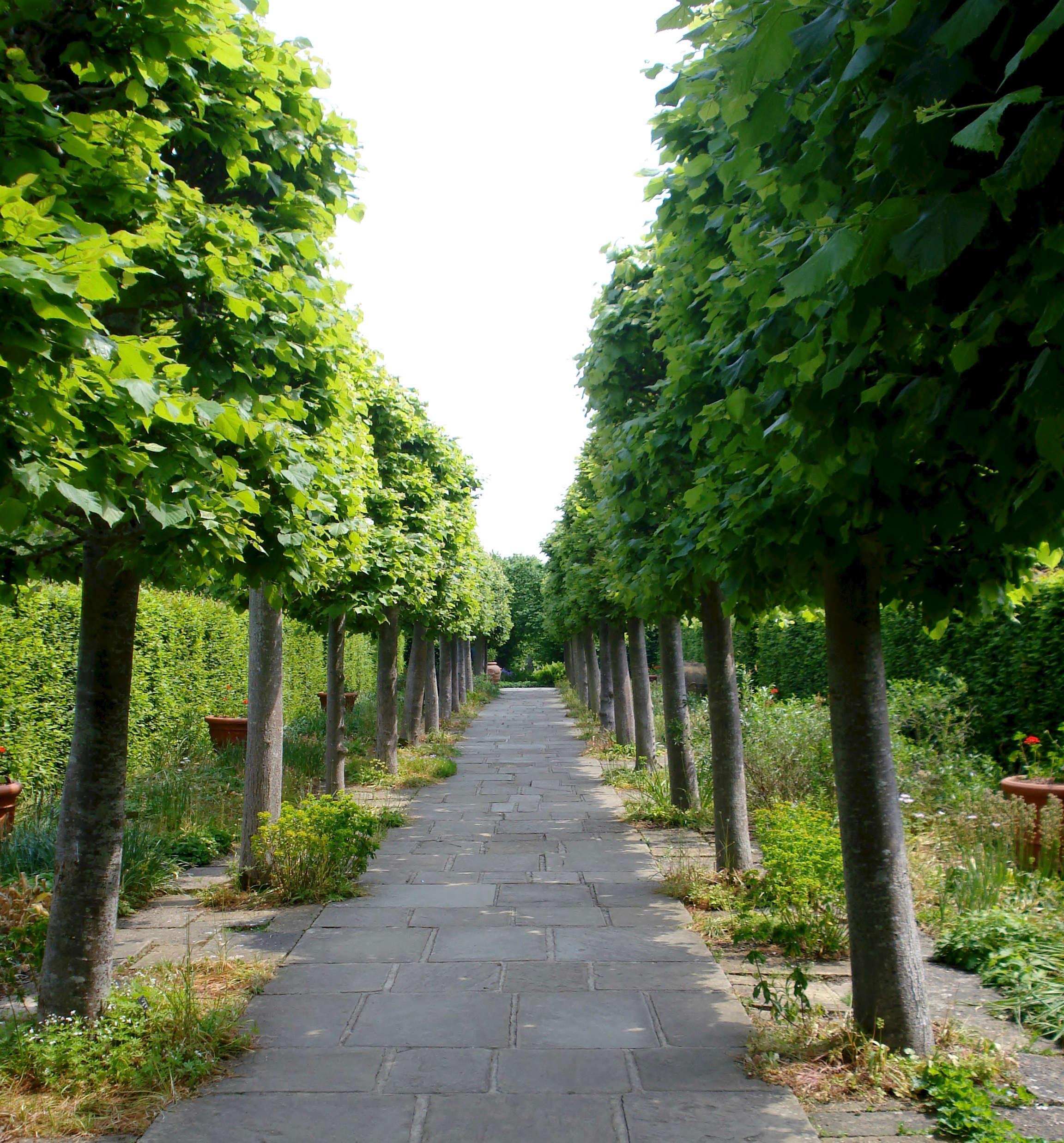 sissinghurst-lime-walk-pleached-trees-phil-bartle-flickr