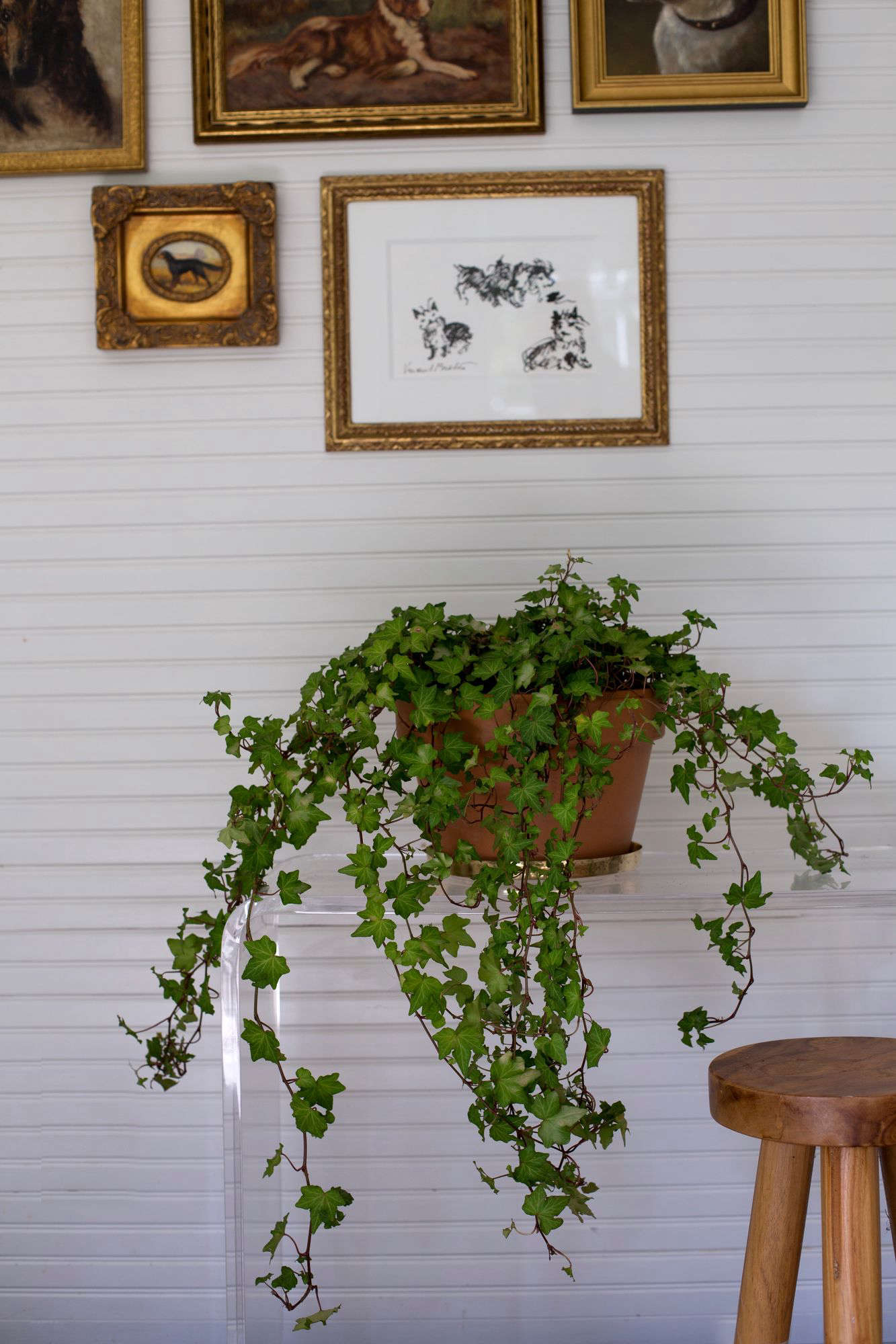 English Ivy is will tolerate low light. See more inBest Houseplants: 9 Indoor Plants for Low Light. Photograph by Mimi Giboin.