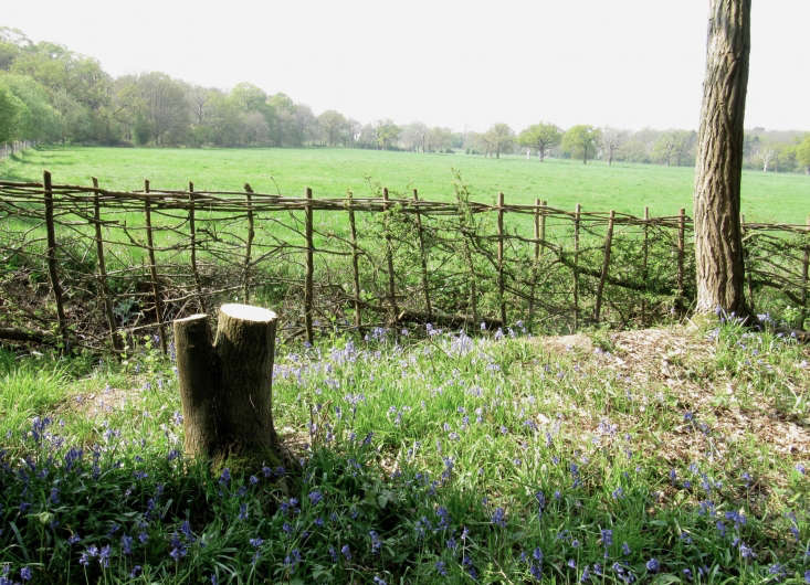 """""""A hedge is more than a row of bushes, it is a living structure with a form and purpose,"""" says John Esling, a hedge layer whose clients includeconservation organizations as well as farmers and landowners. """"Most of the hedges I do are badly overgrown and the work is more hedge restoration, including replanting, than relatively straightforward hedge laying."""" Photograph by William StVigor via Flickr."""
