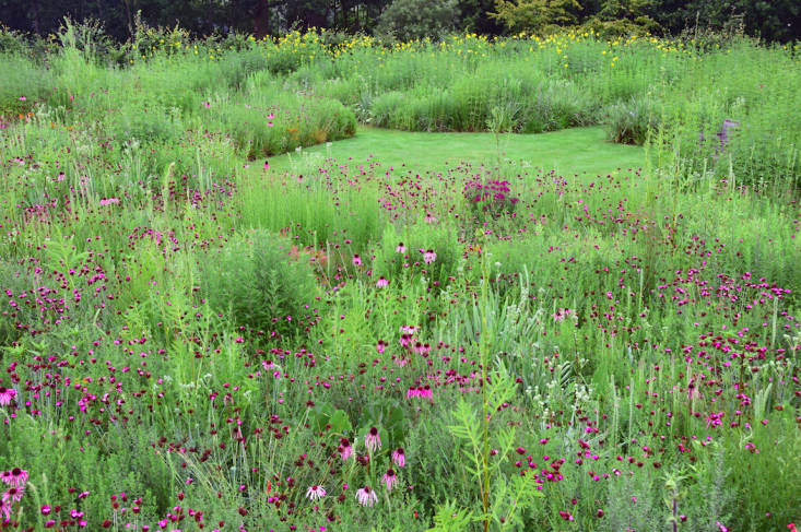 """Designer Tom Stuart-Smith&#8\2\17;s prairie garden. In Sowing Beauty, &#8\2\20;I'm giving a view from the inside,"""" says Hitchmough. """"It's aimed at a broad audience, from people that are professionally involved as landscape architects through to ambitious home gardeners."""""""
