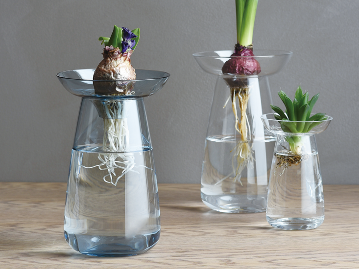 Available in two sizes and three colors (pictured are the clear and blue), the glass Aqua Culture Vase has a removable collar, shaped like a saucer, to suspend bulbs and leaves above the surface of the water.