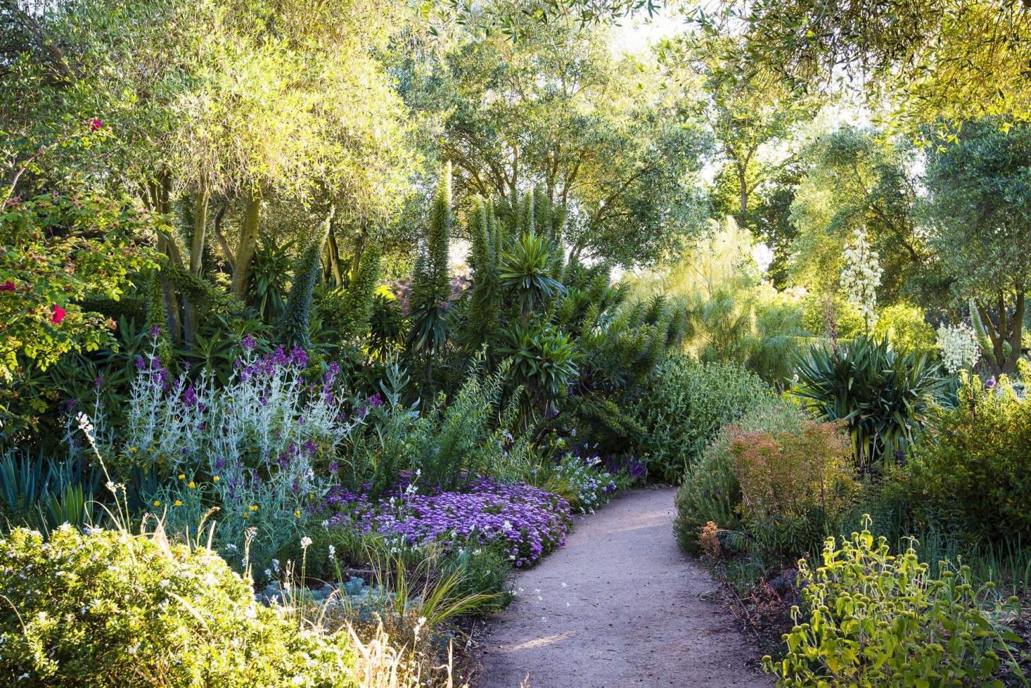 A path bisects the teeming lushness, in a garden with height, volume, and interesting textures.