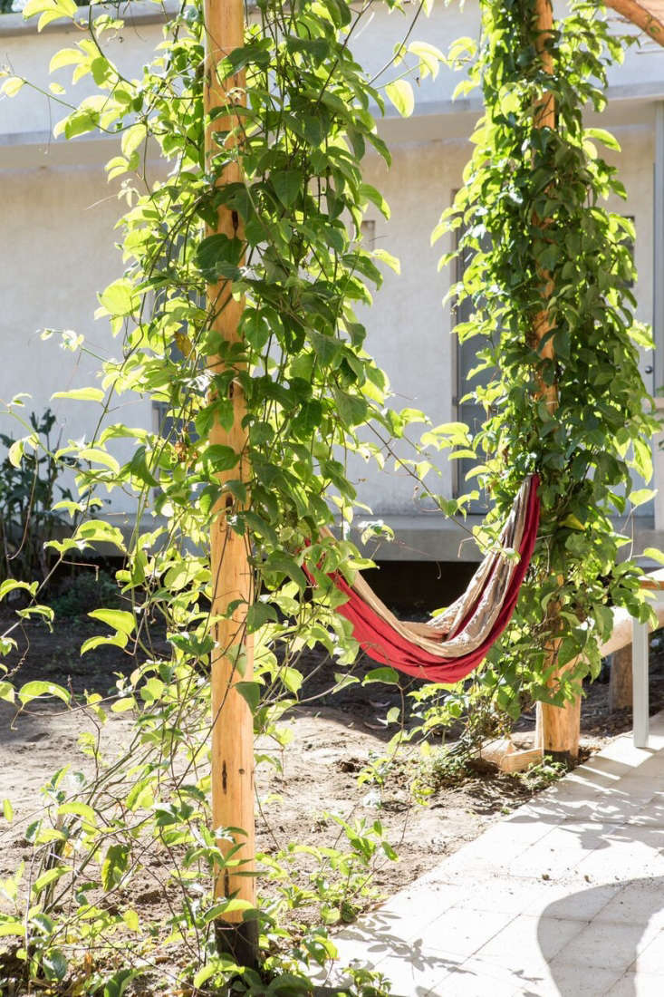Vines are trained to climb the pergola, creating a leafy backdrop for a hammock.