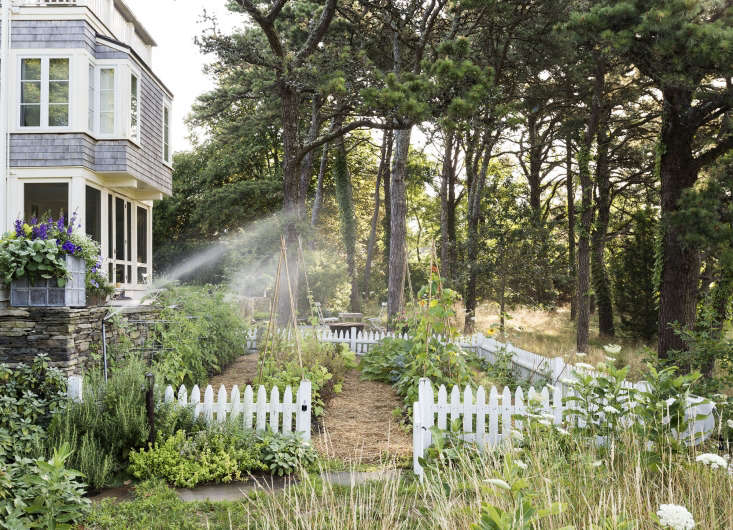 Deep watering leads to deep, healthy roots. Photograph by Matthew Williams forGardenista: The Definitive Guide to Stylish Outdoor Spaces.