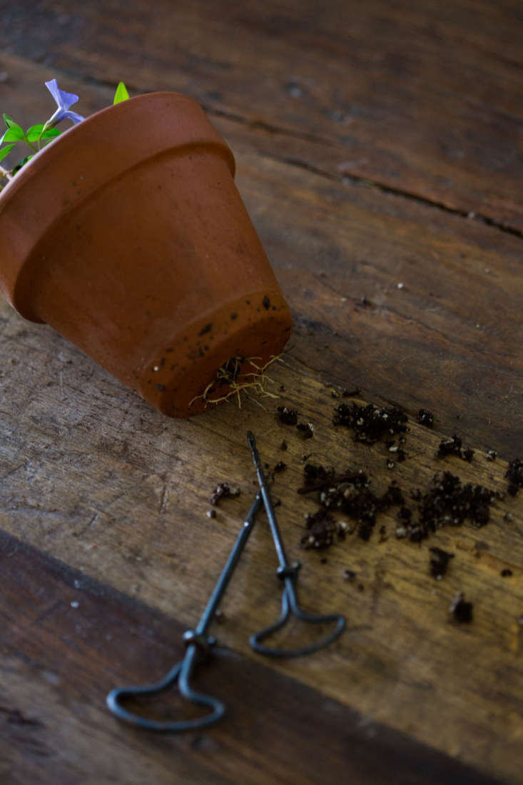 Awls are handy to loosen congested roots.