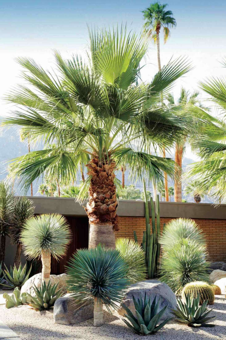 A dry garden in California&#8