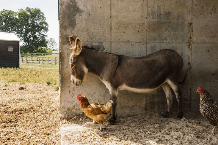 The structure is still used for its intended purposes, but the animals—here, a donkey and chickens—&#8\2\2\1;like to hang out there when they&#8\2\17;re outdoors.&#8\2\2\1;