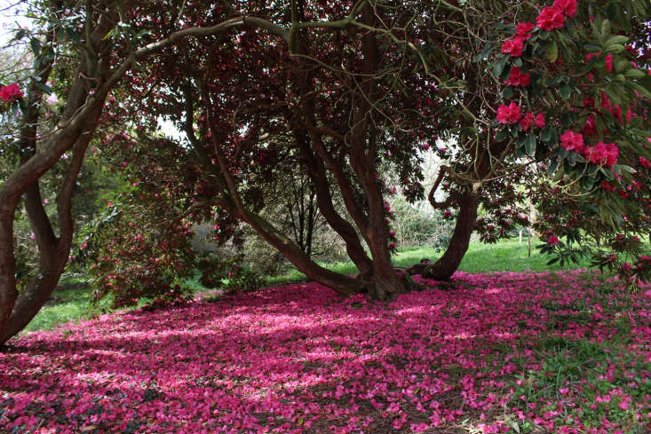 Rhododendrons create acarpet of color. Photograph by Kendra Wilson.