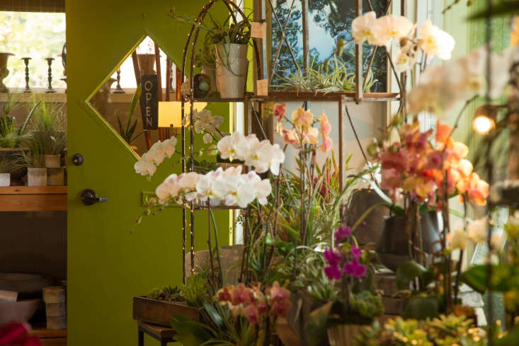 Turner, the owner of Green Door Design in Mill Valley, creates arrangements with living orchids and offers an Orchid Exchange program. After orchids go dormant, customers can trade them in. The plants go to &#8