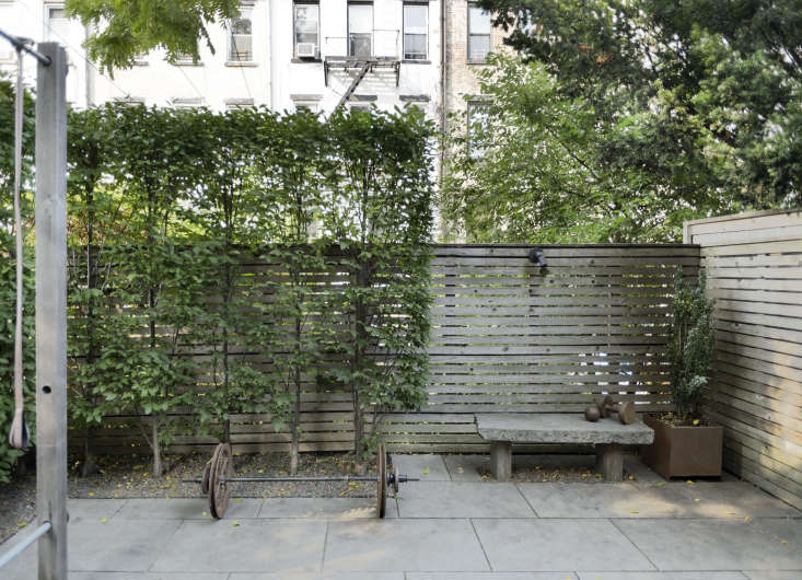In a Brooklyn backyard, a row of small hornbeam trees (Carpinus caroliniana) are pruned tightly to create a flat screen against a fence. Photograph by Matthew Williams for Gardenista. See more of this projectin in our new Gardenista book.