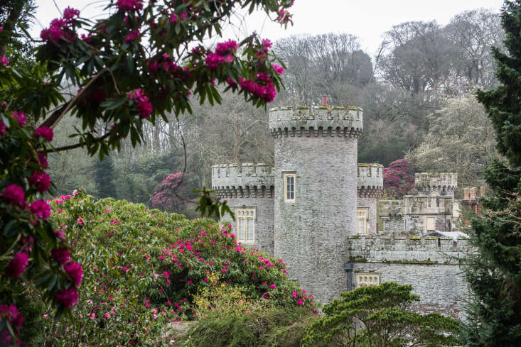 Rhododendrons at Caerhays Castle in Cornwall.
