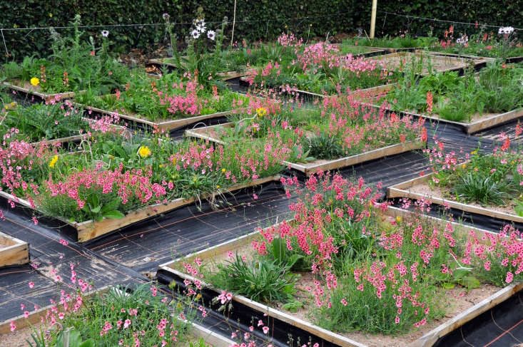 Hitchmough tests potential planting designs in beds that can be from one to eight feet square. It allows him to see how plants will work together visually, but just as important, how they will coexist.