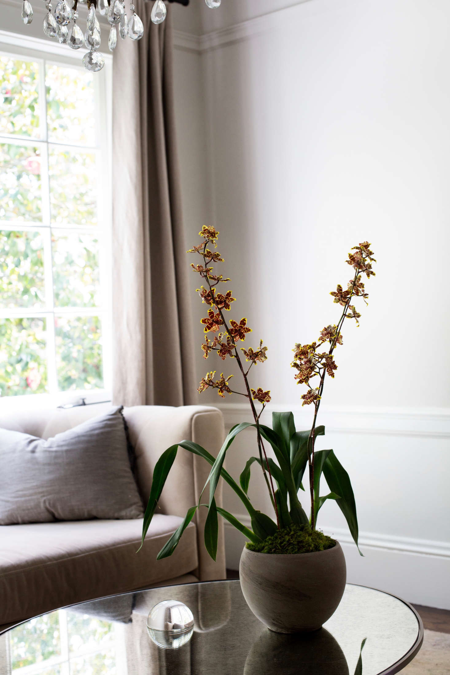 A lacy-flowered Oncidium orchid. Photograph by Mimi Giboin.