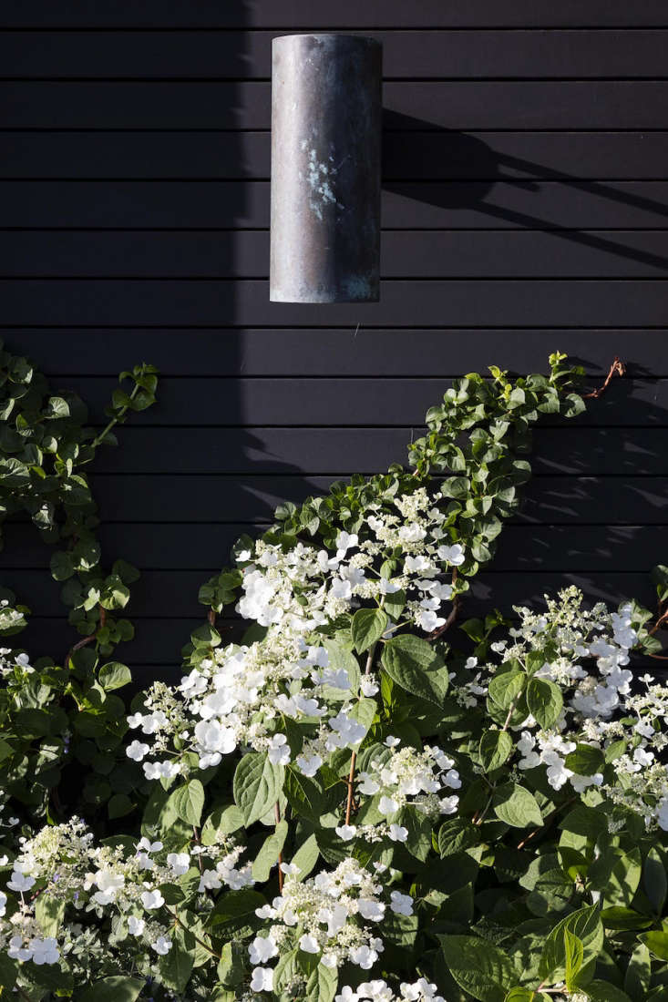 Cold-hardy Hydrangea paniculata &#8\2\16;Tardiva&#8\2\17; lights up a planter filled with flowering perennials.