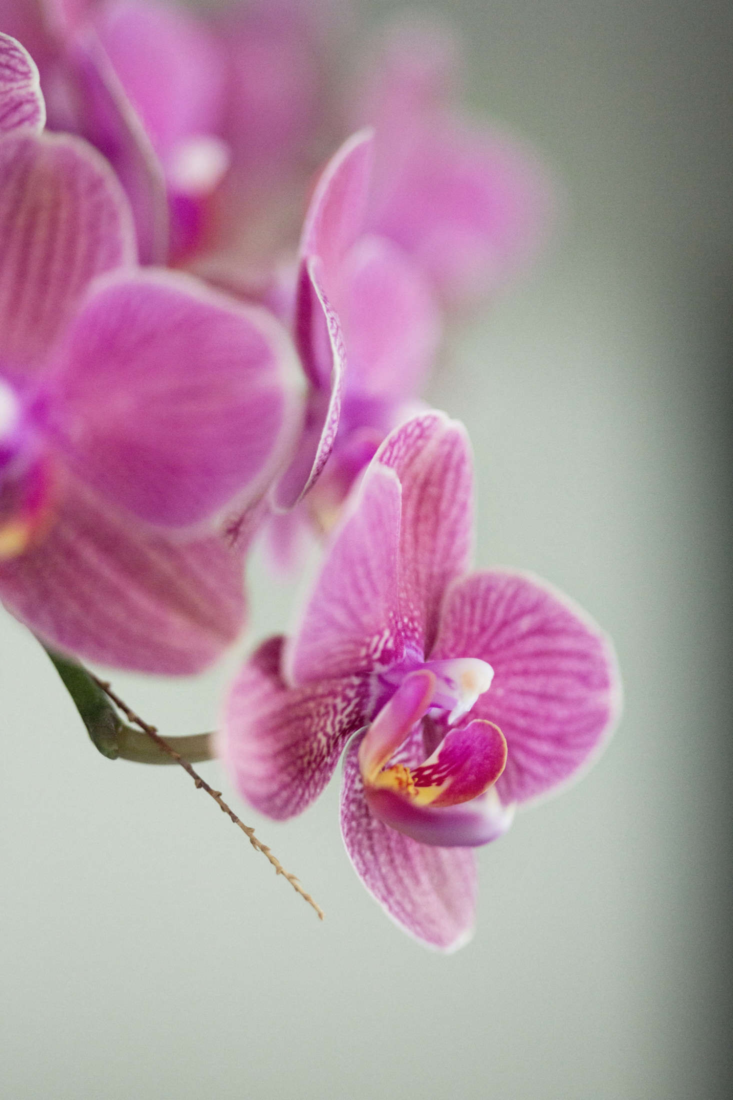 Keep orchids in their plastic nursery pots, inside a larger decorative container. To water, lift out the plastic pot and water it with aroom-temperature flowfrom the kitchen faucet. Allow the waterto drain completely before replacing the orchid in its larger planter.