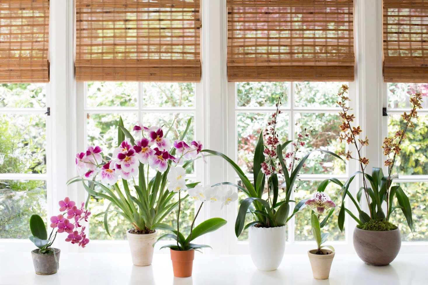 Start an orchid collection with easy-to-grow indoor varieties. See more at Best Indoor Plants: 6 Flowering Orchids to Grow. Photograph by Mimi Giboin.