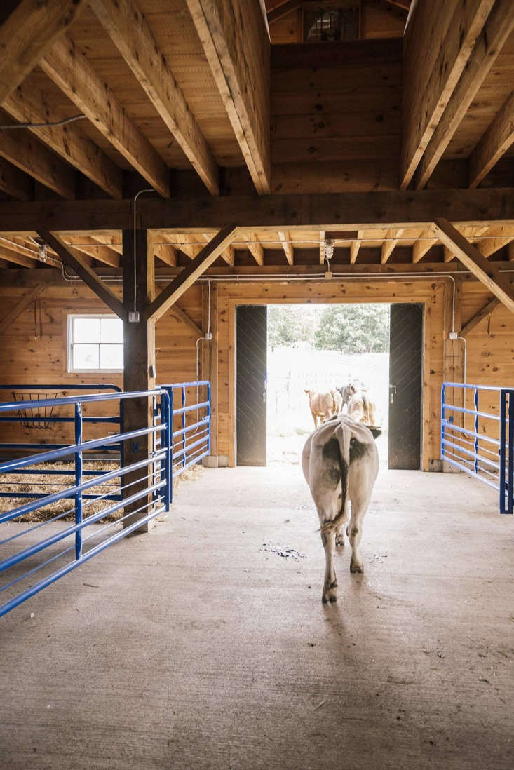 The livestock wing has a concrete floor and is framed in heavy fir timber from Williams Lumber upstate.