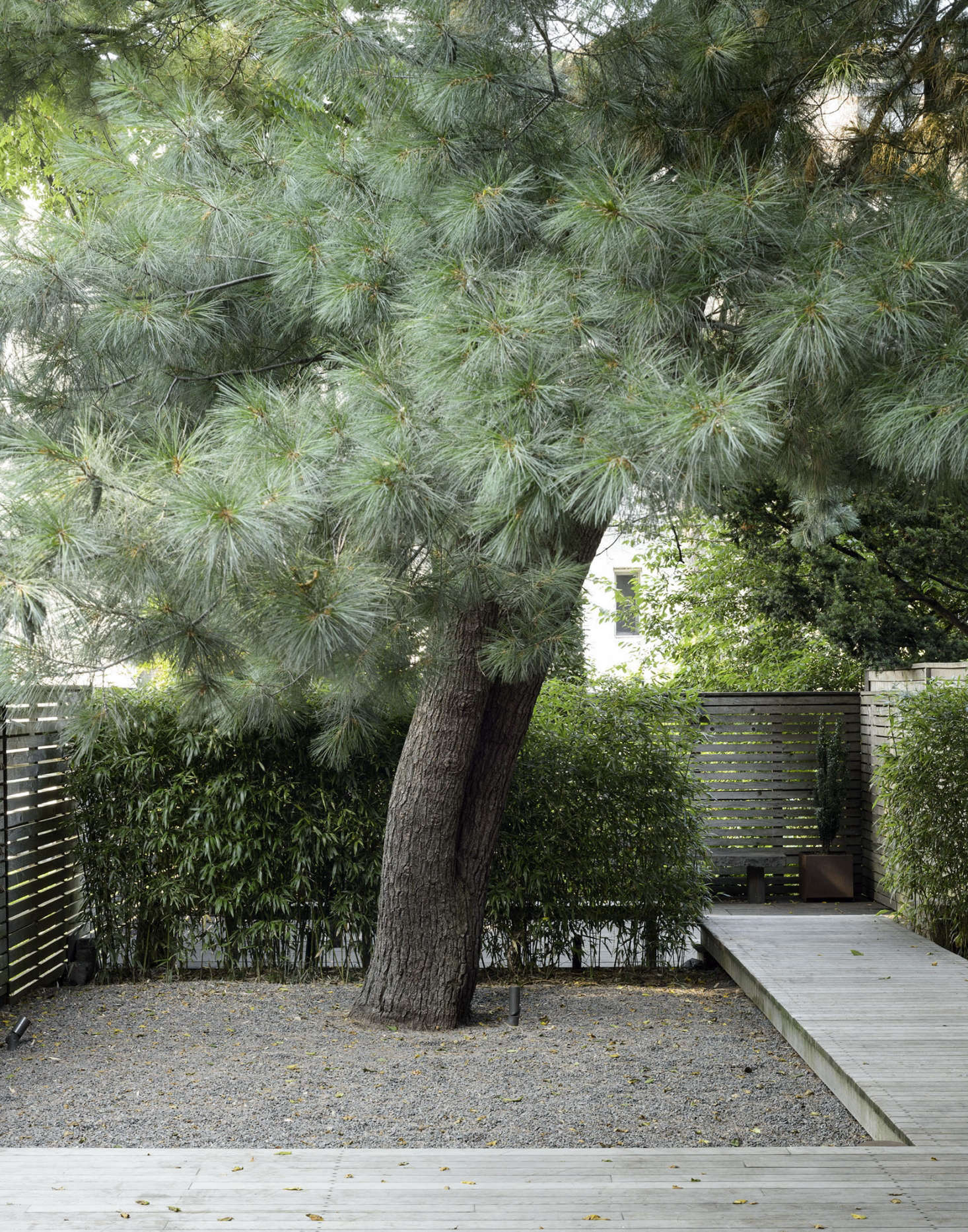 An eastern white pine tree draws the eye away from the neighbors&#8