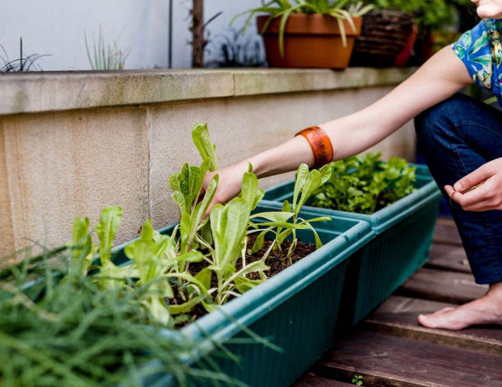 On our reading list: this thoughtful piece onfinding calm and mindfulness through gardening.Photograph by Daniel Shipp, courtesy of The Planthunter.